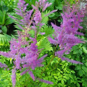 Moisture Loving Plants
