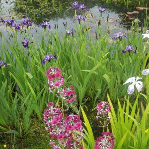 Pond Packs