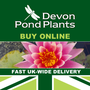 Pond Plants Uk Supplier Based In Devon Fast Delivery Water Lilies
