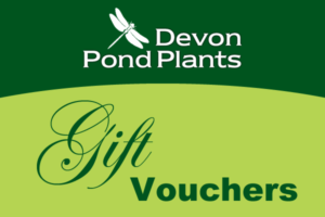 Pond plants gift voucher for the UK