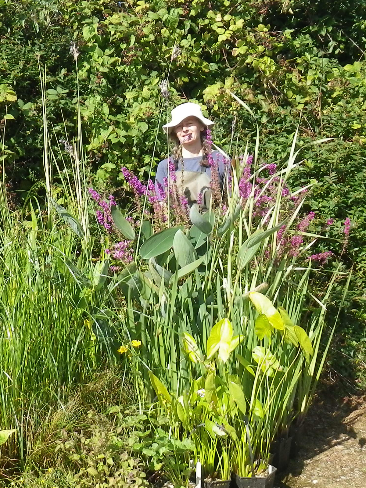 pond plants being maintained by Ruth